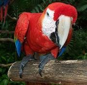 Африканские серые попугаи ара и различного типа и цвета очень здоровый